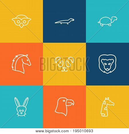 Set Of 9 Alive Outline Icons Set.Collection Of Feline Bear, Rabbit, Eagle And Other Elements.