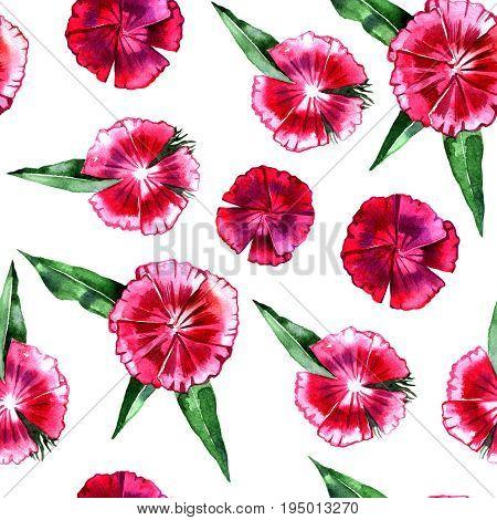 Floral pattern. Flower pink carnation seamless background. Flourish ornamental spring garden texture.