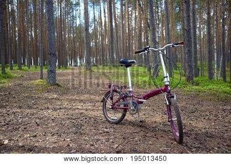 Claret red folding bicycle is standing on needles in a pine forest