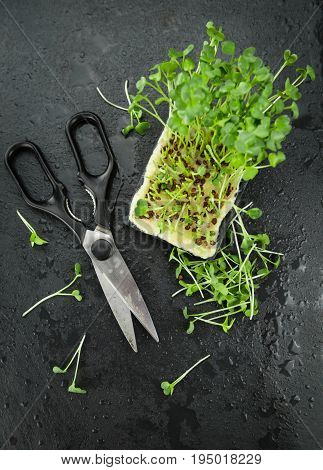 Portion Of Fresh Cutted Cress On A Slate Slab