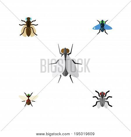 Flat Icon Fly Set Of Hum, Dung, Mosquito And Other Vector Objects. Also Includes Fly, Mosquito, Dung Elements.
