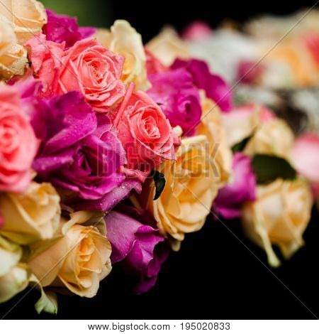 Luxury pink and beige roses border on the black background