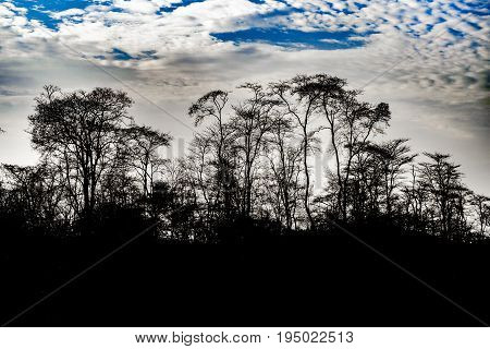 Tree Silhouette And Cloudy Sky Landscape