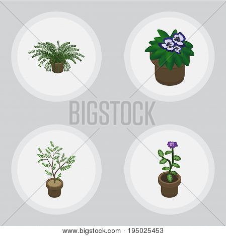 Isometric Plant Set Of Fern, Flowerpot, Plant And Other Vector Objects. Also Includes Flowerpot, Pot, Plant Elements.