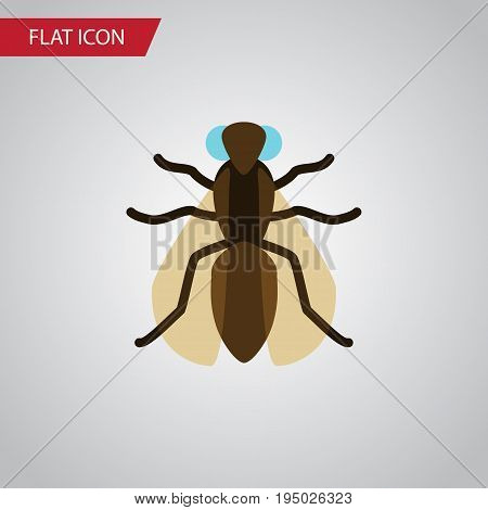 Isolated Gnat Flat Icon. Mosquito Vector Element Can Be Used For Gnat, Mosquito, Hum Design Concept.