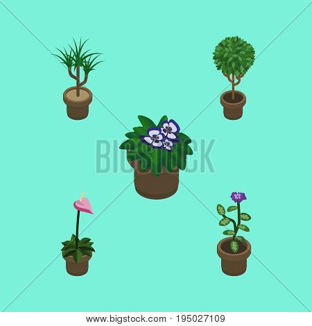 Isometric Houseplant Set Of Flower, Tree, Grower And Other Vector Objects. Also Includes Botany, Flowerpot, Pot Elements.