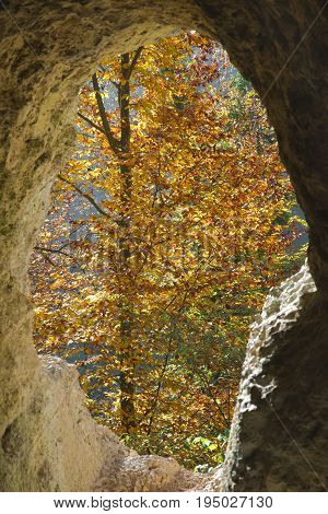 Autumn tree with yellow leaves through the hole of the Diana Grotto of Ermitage Arlesheim Switzerland