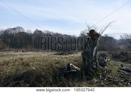 an old stump in the woods. Autumn landscape
