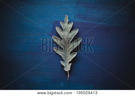 Oak tree leaf on blue wooden background. Texture and background of oak leaves for designers. Macro view of leaf texture on wood background. Organic texture of green leaves.