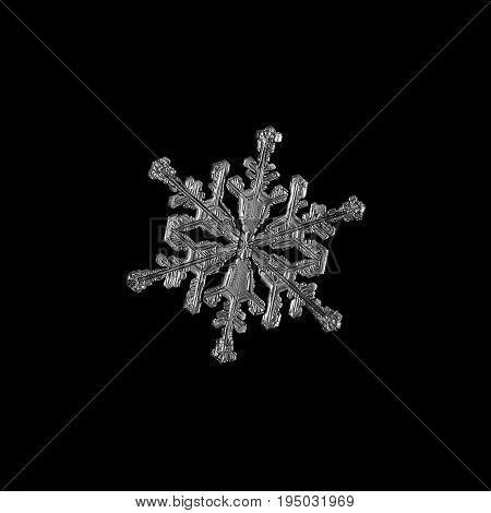 Snowflake isolated on black background. Macro photo of real snow crystal: small stellar dendrite with hexagonal symmetry, elegant shape and long, ornate arms with side branches. Monochrome version.