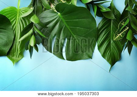 Beautiful composition with variety of fresh exotic plants on blue background, top view