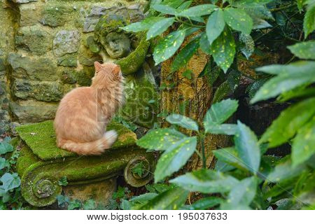 Ginger cat look on antique stone angel.