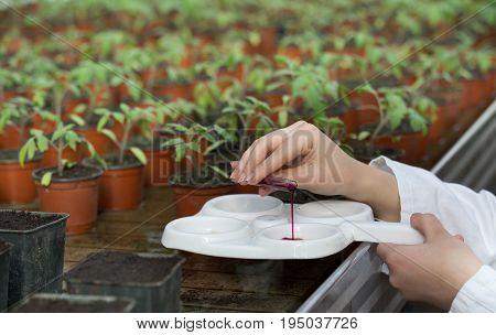 Biologist Working With Chemicals And Sprouts In Greenhouse