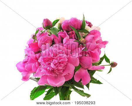 Beautiful peony flowers on white background