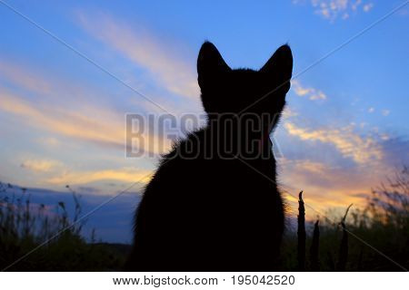 Silhouette of cat at beautiful sunset. Cute cat on the road,sunset background,cat looking. Stray kitten looking at wonderful sunset.