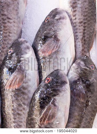 fresh catch of red eyed fish on mediterranean market