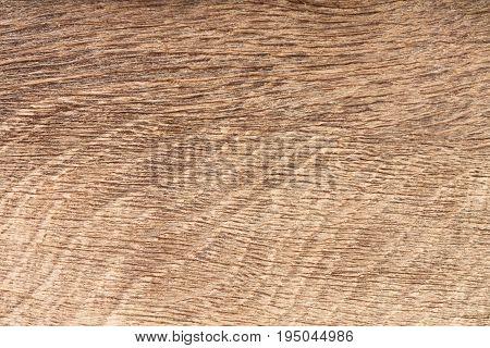 High resolution natural wood bog oak grain texture. High res macro photo.