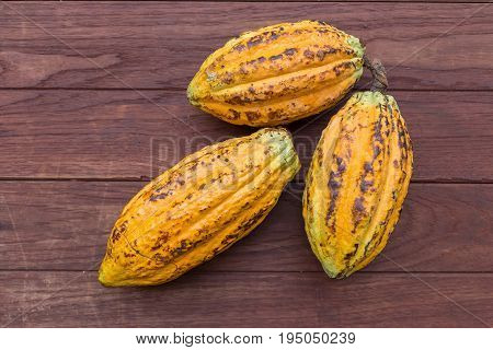 Cacao fruit, Ripe raw cocoa pod on ground.