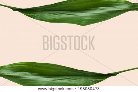 nature, organic and botany concept - green leaves with blank space over beige background