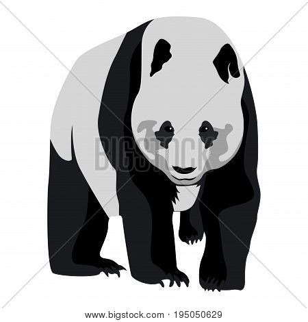 Isolated Panda Sketch