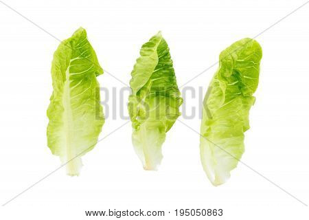 Fresh Green Cos Lettuce Isolated On White Background