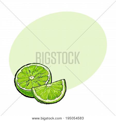 Half and quarter of ripe green lime, hand drawn sketch style vector illustration with space for text. Hand drawing of unpeeled lime cut in half and piece