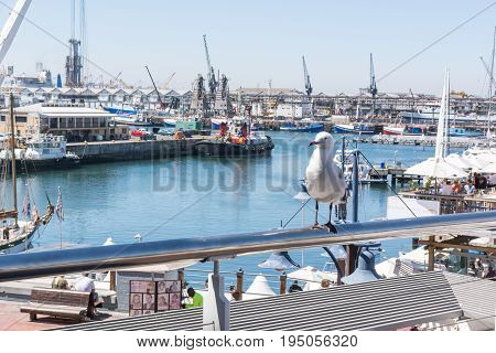 Cape Town South Africa - March 02 2017: Seagull on rail at V&A Waterfront with Cape Town Harbour in background