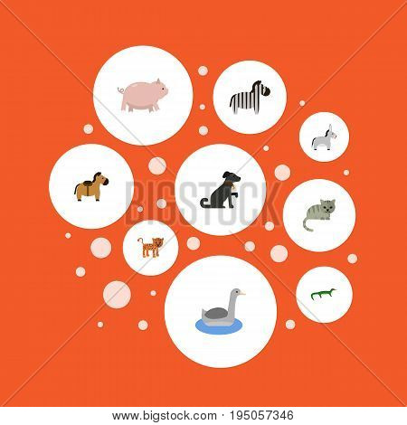 Flat Icons Hound, Jackass, Swine And Other Vector Elements. Set Of Zoology Flat Icons Symbols Also Includes Gecko, Puma, Hog Objects.