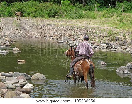 Local cowboy rides a horse through river, Nicaragua, Central America