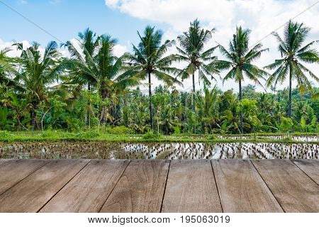Perspective Empty Wooden Table In Front Of Harvested Rice Field And Coconut Trees