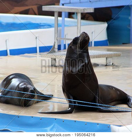 baby seal begging other seal not to ignore him