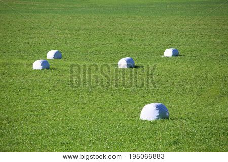 Straw Packages On Field