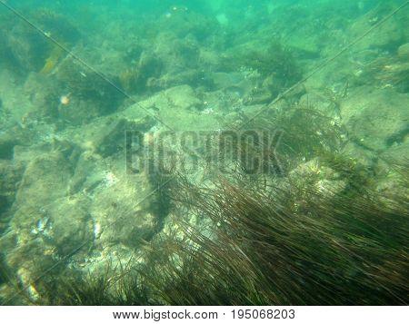 Sea Life Of The Entrance, Nsw Central Coast Australia.