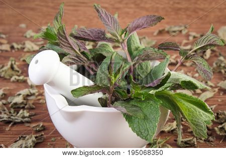 Dried And Fresh Green Mint With White Glass Mortar, Healthy Lifestyle