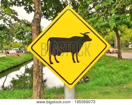 Animal warning sign on the road. Road sign in Thailand