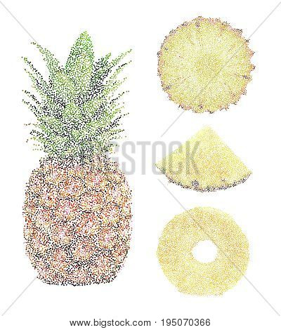 Tropical Nature Fresh Colorful Stippling Fruit Isolated Vector Pineapple