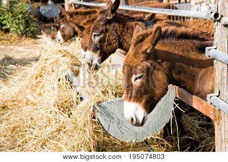 Several donkeys in the yard. Donkey farm on Cyprus