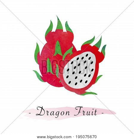 Colorful Watercolor Texture Vector Healthy Dragon Fruit Pitaya