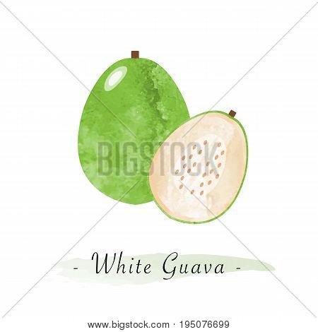 Colorful Watercolor Texture Vector Healthy Fruit White Guava
