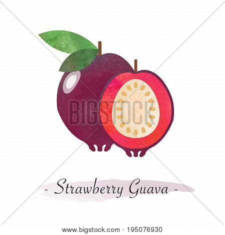 Colorful Watercolor Texture Vector Healthy Fruit Strawberry Guava