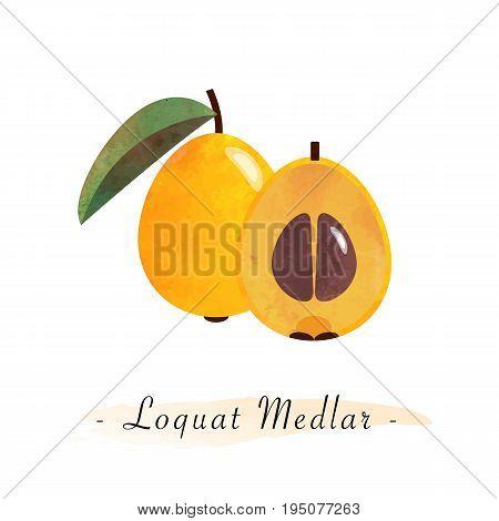 Colorful Watercolor Texture Vector Healthy Fruit Loquat Medlar