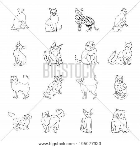 Cat breeds set icons in line design. Big collection of cat breeds vector symbol stock illustration