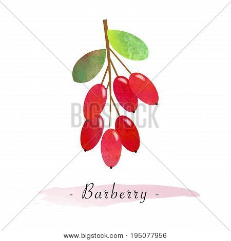 Colorful Watercolor Texture Vector Healthy Fruit Barberry