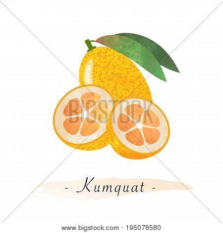 Colorful Watercolor Texture Vector Healthy Fruit Kumquat