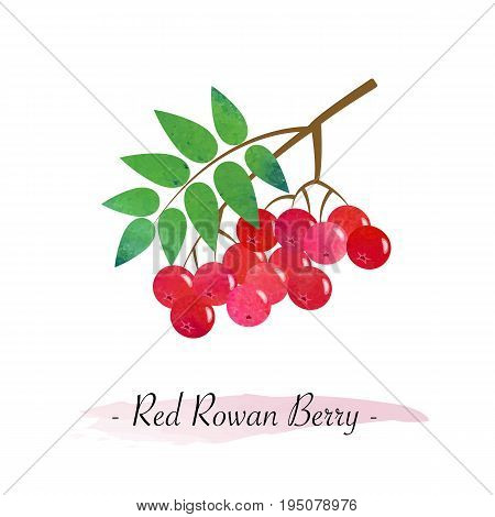 Colorful watercolor texture vector healthy fruit red rowan berry