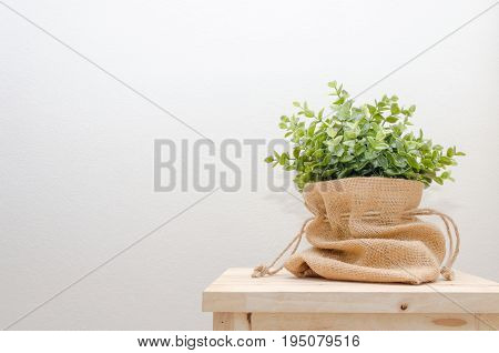 green tree plant in pot or bag sack small decorative on wooden desk and white wall background selective focus copy space