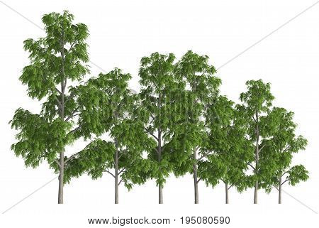 3D illustration trees row isolated on white, can be used for matte painting.