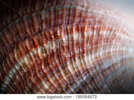 Natural gemstone nacre pearl close-up beautiful texture of gemstone