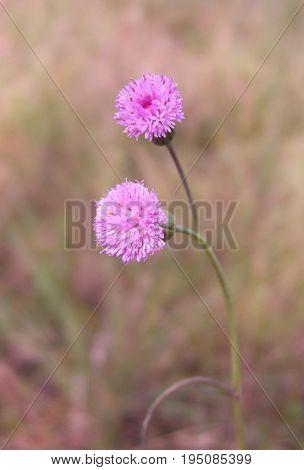 A Beautiful nature landscape - Alpine meadow