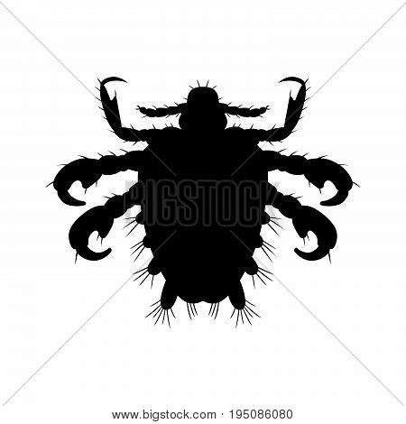 Crab louse, an insect that is an obligate ectoparasite of humans, feeding exclusively on blood
